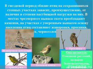 В гнездовой период обилие птиц на сохранившихся степных участках зависит, преиму