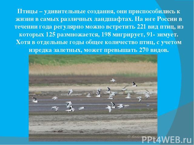 Птицы – удивительные создания, они приспособились к жизни в самых различных ландшафтах. На юге России в течении года регулярно можно встретить 221 вид птиц, из которых 125 размножается, 198 мигрирует, 91- зимует. Хотя в отдельные годы общее количест…