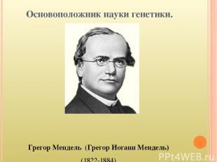 Основоположник науки генетики. Грегор Мендель (Грегор Иоганн Мендель) (1822-1884