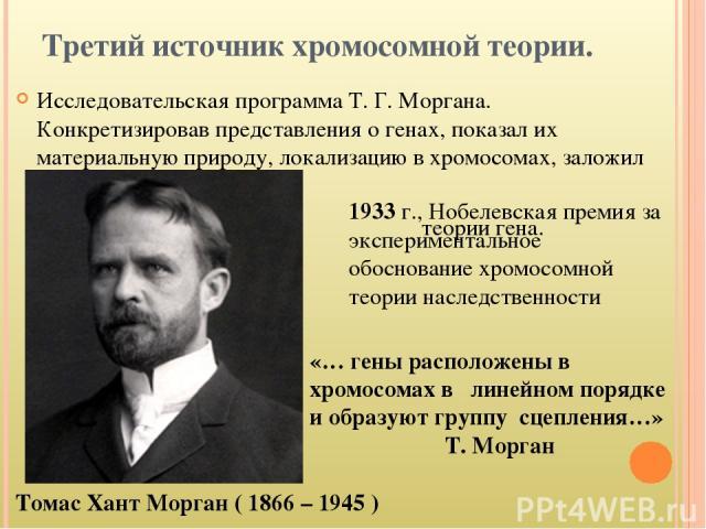 Третий источник хромосомной теории. Исследовательская программа Т. Г. Моргана. Конкретизировав представления о генах, показал их материальную природу, локализацию в хромосомах, заложил основу современной теории гена. Томас Хант Морган ( 1866 – 1945 …