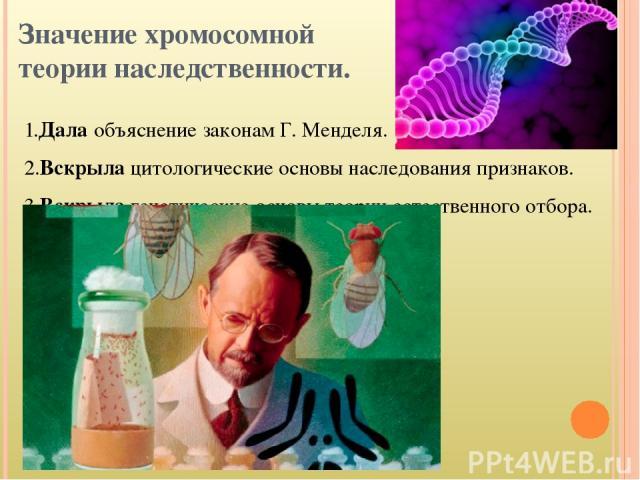 Значение хромосомной теории наследственности. 1.Дала объяснение законам Г. Менделя. 2.Вскрыла цитологические основы наследования признаков. 3.Вскрыла генетические основы теории естественного отбора.