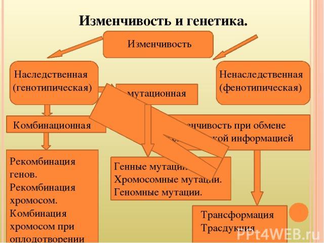 Изменчивость и генетика. Наследственная (генотипическая) Изменчивость Ненаследственная (фенотипическая) мутационная Комбинационная Изменчивость при обмене генетической информацией Рекомбинация генов. Рекомбинация хромосом. Комбинация хромосом при оп…