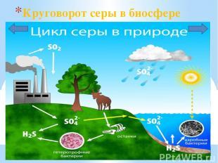 Круговорот серы в биосфере