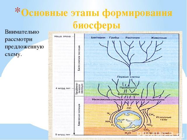 Основные этапы формирования биосферы Внимательно рассмотри предложенную схему.