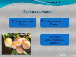 Отделы селекции. Селекция 2 Селекция растений: Сорта Селекция животных: Породы С