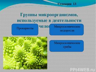 Группы микроорганизмов, используемые в деятельности человека. Селекция 13 Прокар