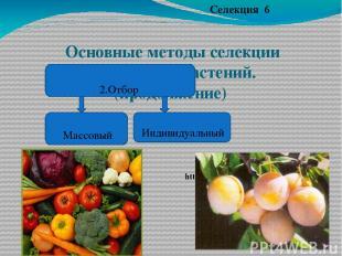 Основные методы селекции животных и растений.(продолжение) Селекция 6 2.Отбор ht