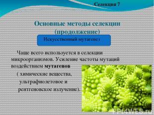 Основные методы селекции (продолжение) Чаще всего используется в селекции микроо