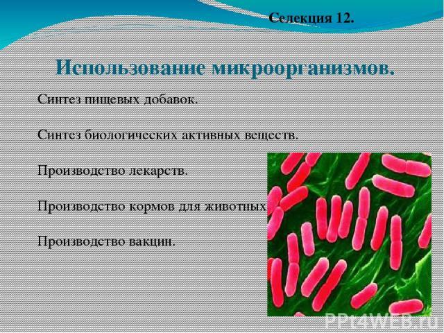 Использование микроорганизмов. Синтез пищевых добавок. Синтез биологических активных веществ. Производство лекарств. Производство кормов для животных Производство вакцин. Селекция 12.