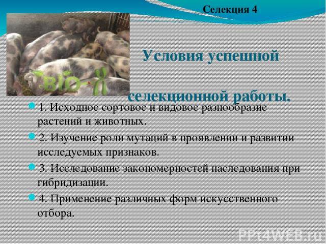 Условия успешной селекционной работы. 1. Исходное сортовое и видовое разнообразие растений и животных. 2. Изучение роли мутаций в проявлении и развитии исследуемых признаков. 3. Исследование закономерностей наследования при гибридизации. 4. Применен…