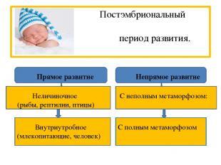 Постэмбриональный период развития. Прямое развитие Непрямое развитие Неличиночно