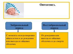 Онтогенез. Эмбриональный период Постэмбриональный период С момента оплодотворени