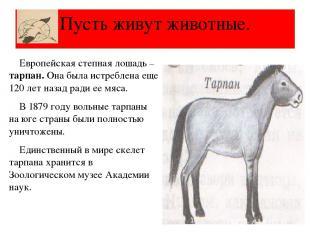 Европейская степная лошадь – тарпан. Она была истреблена еще 120 лет назад ради