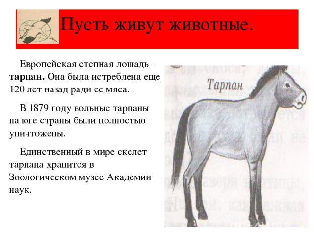 Европейская степная лошадь – тарпан. Она была истреблена еще 120 лет назад ради ее мяса. В 1879 году вольные тарпаны на юге страны были полностью уничтожены. Единственный в мире скелет тарпана хранится в Зоологическом музее Академии наук. Пусть живу…