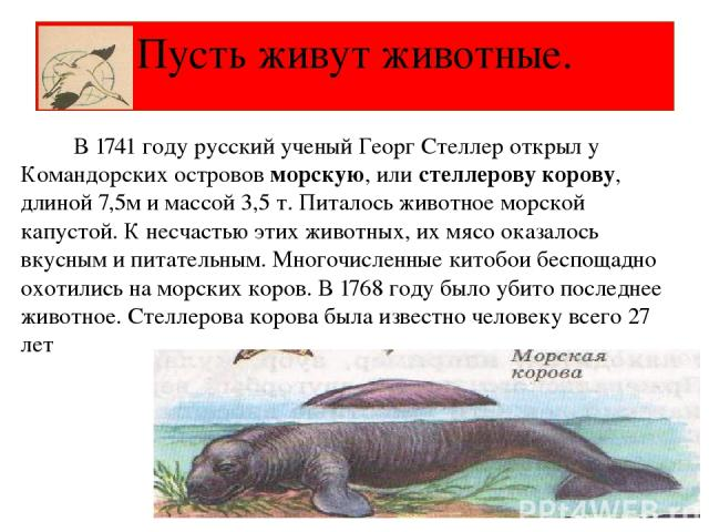 Пусть живут животные. В 1741 году русский ученый Георг Стеллер открыл у Командорских островов морскую, или стеллерову корову, длиной 7,5м и массой 3,5 т. Питалось животное морской капустой. К несчастью этих животных, их мясо оказалось вкусным и пита…