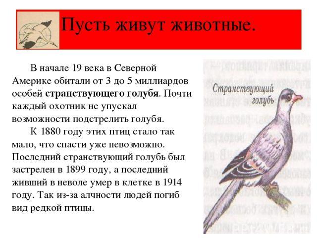 Пусть живут животные. В начале 19 века в Северной Америке обитали от 3 до 5 миллиардов особей странствующего голубя. Почти каждый охотник не упускал возможности подстрелить голубя. К 1880 году этих птиц стало так мало, что спасти уже невозможно. Пос…