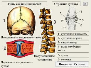 затылочная кость затылочное отверстие пирамидный отросток клиновидная кость чешу