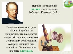 Первые изображения клетки были сделаны Робертом Гуком в 1665 г. Во время изучени