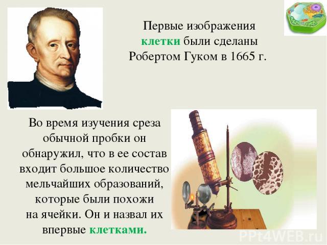Первые изображения клетки были сделаны Робертом Гуком в 1665 г. Во время изучения среза обычной пробки он обнаружил, что в ее состав входит большое количество мельчайших образований, которые были похожи наячейки. Он и назвал их впервые клетками.