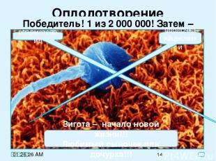 Оплодотворение Победитель! 1 из 2 000 000! Затем – зигота! сперматозоид оболочка