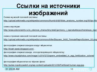 Ссылки на источники изображений Схема мужской половой системы: http://upload.wik