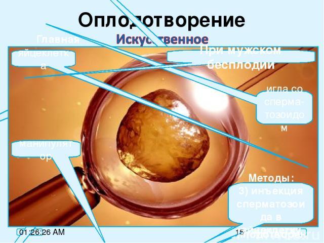 Оплодотворение оплодо-творение имплан-тация Главная причина: невозможность забеременеть естественным путём. Методы: 1) искусственная инсеминация; 2) ЭКО (экстро-корпоральное оплодотворен.) При женском бесплодии яйцеклетка игла со сперма-тозоидом ман…