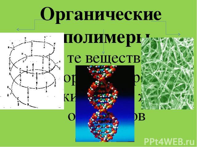 . Органические полимеры - это те вещества, из которых построены клетки и ткани живых организмов нуклеиновые кислоты белки целлюлоза