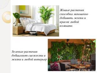 Живые растения способны мгновенно добавить жизни и красок любой комнате. Зеленые