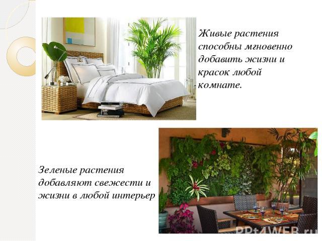 Живые растения способны мгновенно добавить жизни и красок любой комнате. Зеленые растения добавляют свежести и жизни в любой интерьер