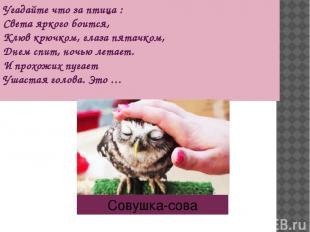 Угадайте что за птица : Света яркого боится, Клюв крючком, глаза пятачком, Днем