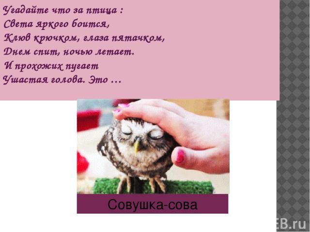 Угадайте что за птица : Света яркого боится, Клюв крючком, глаза пятачком, Днем спит, ночью летает. И прохожих пугает Ушастая голова. Это … Совушка-сова