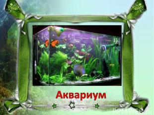 Домик из стекла, с водой, Есть в нём садик небольшой. И ракушки там и тут, Рыбки