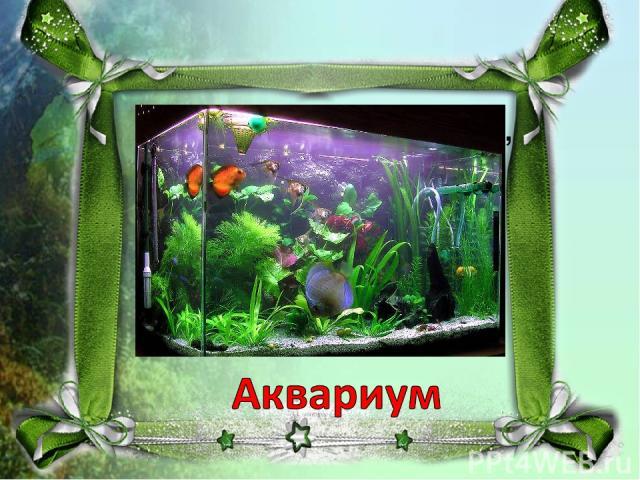 Домик из стекла, с водой, Есть в нём садик небольшой. И ракушки там и тут, Рыбки в домике живут. Это что за домик, дети? На загадку кто ответит?