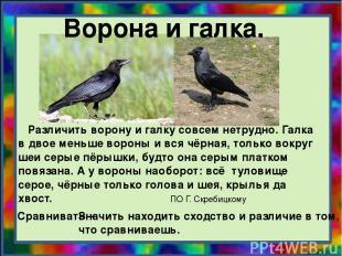 Ворона и галка. Различить ворону и галку совсем нетрудно. Галка в двое меньше во