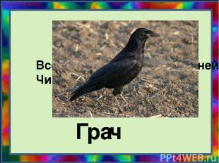 Всех перелётных птиц черней, Чистит пашню от червей. Гра ч