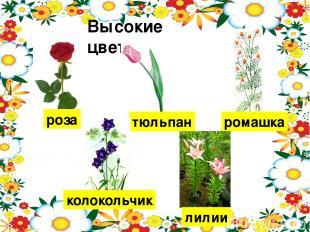 Высокие цветы. роза тюльпан ромашка колокольчик лилии