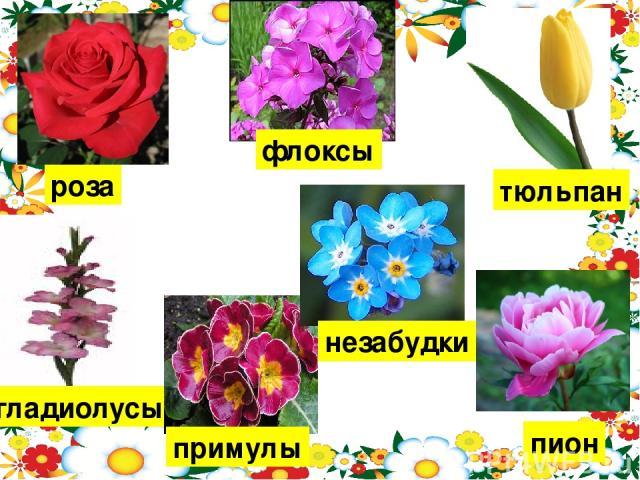 роза гладиолусы тюльпан пион флоксы примулы незабудки Качание цветок крупный, увеличение цветок мелкий.