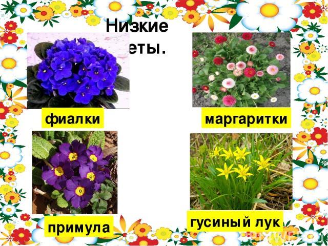 Низкие цветы. фиалки маргаритки примула гусиный лук