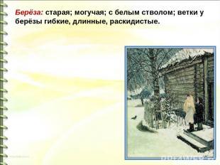 Берёза: старая; могучая; с белым стволом; ветки у берёзы гибкие, длинные, раскид