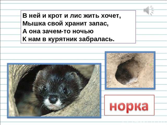 В ней и крот и лис жить хочет, Мышка свой хранит запас, А она зачем-то ночью К нам в курятник забралась.