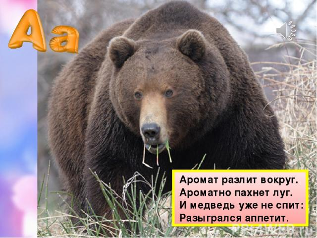 Аромат разлит вокруг. Ароматно пахнет луг. И медведь уже не спит: Разыгрался аппетит.