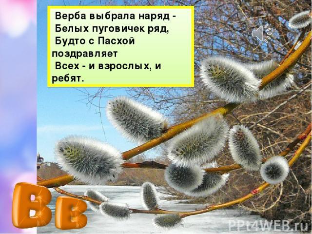 Верба выбрала наряд - Белых пуговичек ряд, Будто с Пасхой поздравляет Всех - и взрослых, и ребят.