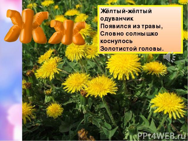 Жёлтый-жёлтый одуванчик Появился из травы, Словно солнышко коснулось Золотистой головы.