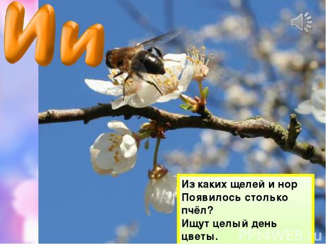Из каких щелей и нор Появилось столько пчёл? Ищут целый день цветы. Для чего, не знаешь ты?