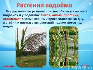 Все растения по разному приспособились к жизни в водоёмах и у водоёмах. Рогоз, к