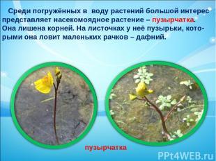 Среди погружённых в воду растений большой интерес представляет насекомоядное рас
