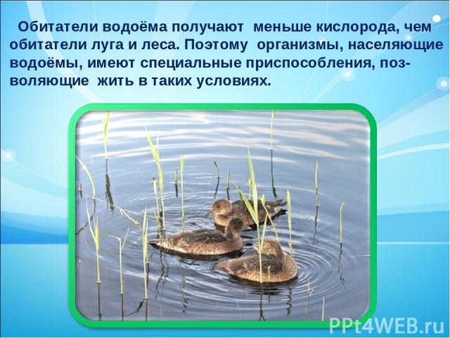 Обитатели водоёма получают меньше кислорода, чем обитатели луга и леса. Поэтому организмы, населяющие водоёмы, имеют специальные приспособления, поз- воляющие жить в таких условиях.
