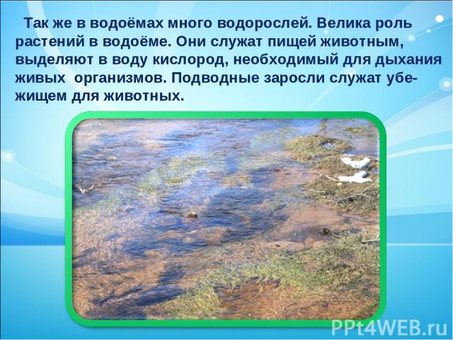 Так же в водоёмах много водорослей. Велика роль растений в водоёме. Они служат пищей животным, выделяют в воду кислород, необходимый для дыхания живых организмов. Подводные заросли служат убе- жищем для животных.