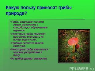 Какую пользу приносят грибы природе? • Грибы разрушают остатки живых организмов