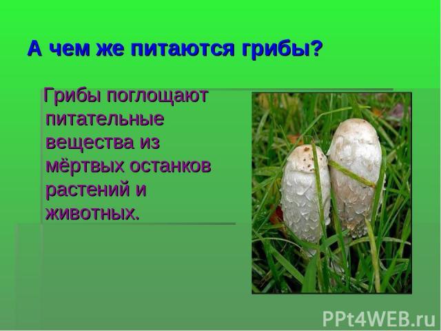 А чем же питаются грибы? Грибы поглощают питательные вещества из мёртвых останков растений и животных.